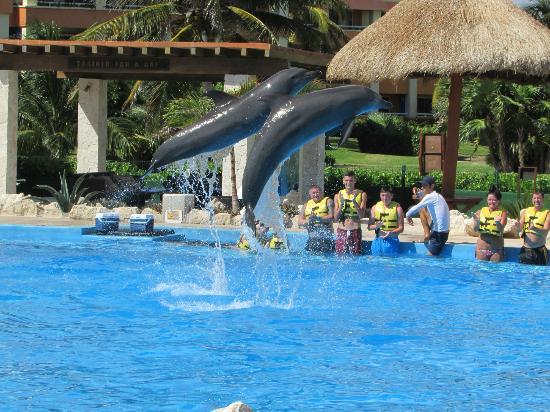 Dolphins Tulum Venue